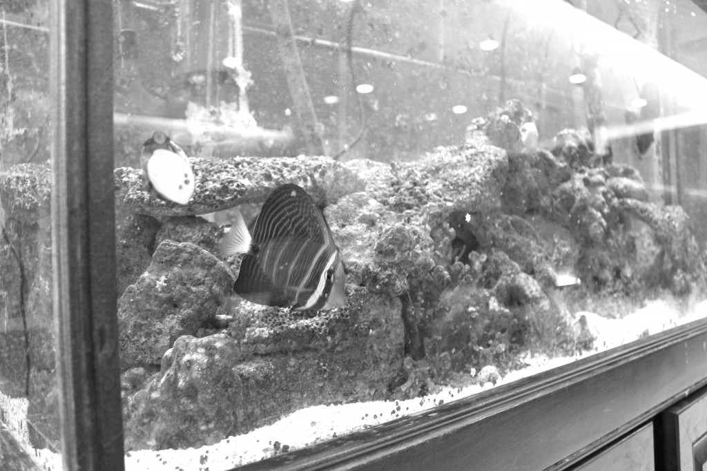 A closer look at some of the creatures within the fish tank on the second floor of the Science and Technology Building. Marine science students are responsible for maintaining this tank.  Photo Credit / Jamie Reese