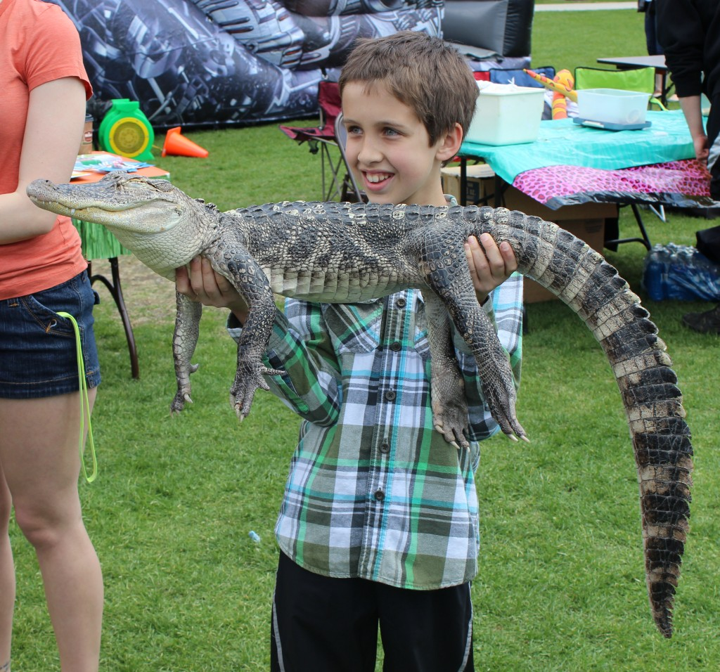 A community member holding one of the exotic animals at Community on the Quad: an alligator.  Photo Credit / Jamie Reese