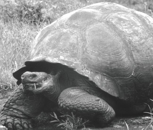 how to say tortoise in spanish