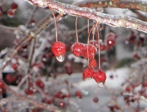 Frozen fun is at your fingertips. Photo Credit / Martina Kraemer