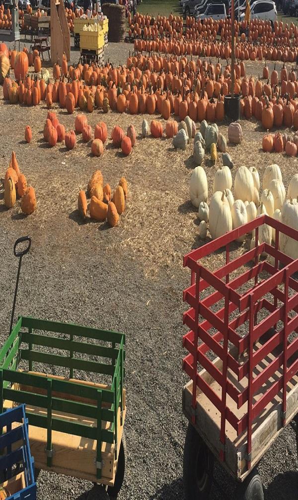 Make sure to pick out a pumpkin while you still can! Photo Credit / Samantha Werkheiser