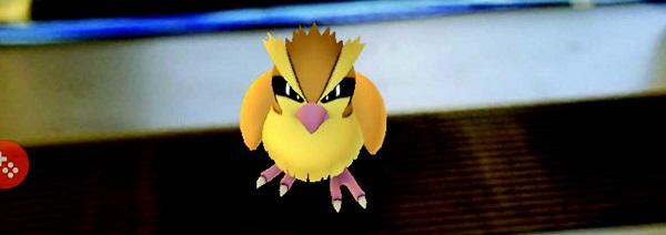 Pidgey from Pokémon Go. Photo Credit / Kathleen Kraemer